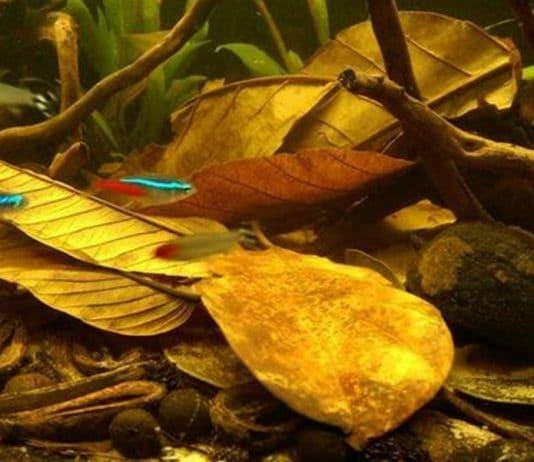Acidificanti naturali: le foglie