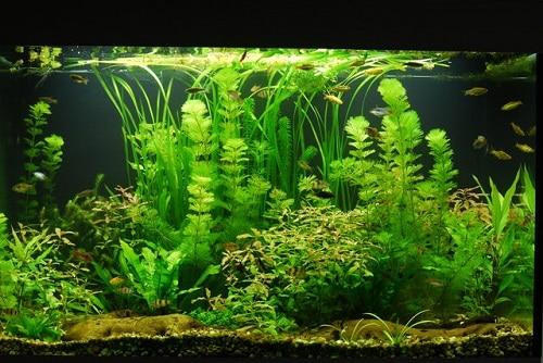 Natural tank