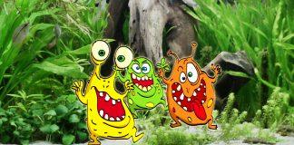 I batteri in acquario