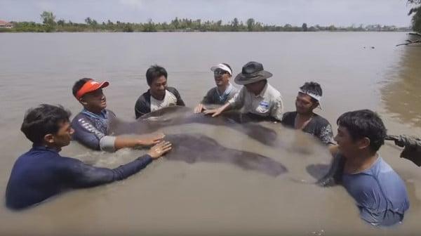 Razza gigante morta d'inquinamento nel fiume Bang Pakong