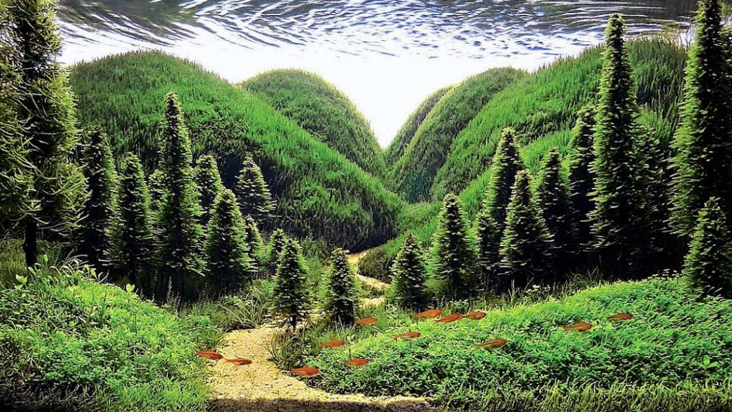 L'acquario naturale