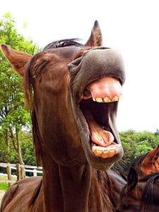 Cavallo che nitrisce