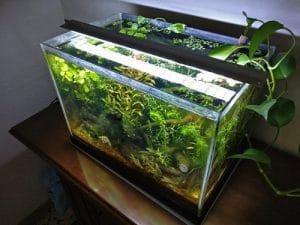 Plafoniera Acquario prova LED