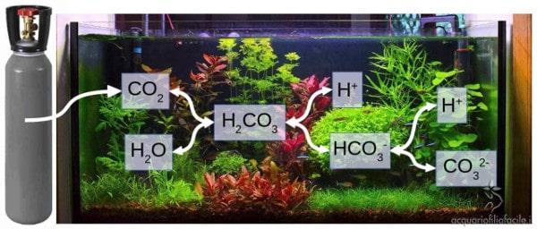 Schema completo dell'azione acidificante della CO2