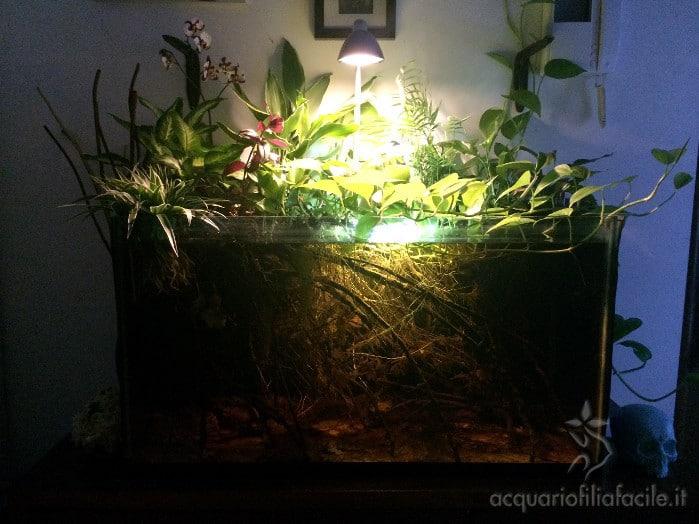 Flora Rio Negro