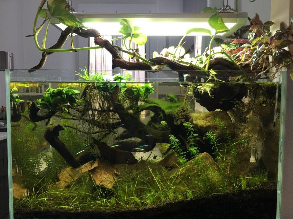 Panoramica acquario amazzonico
