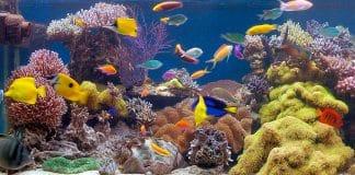 Un tuffo nella parte salata - Acquario marino