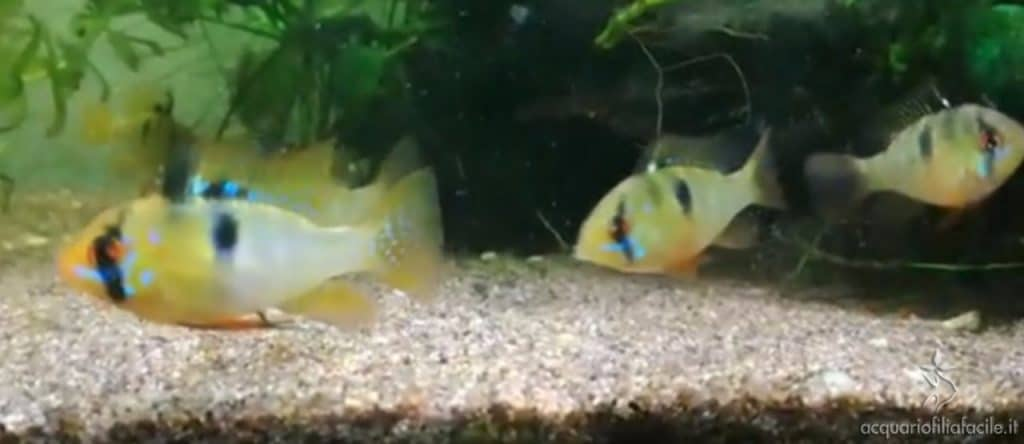 I piccoli (5 mesi)