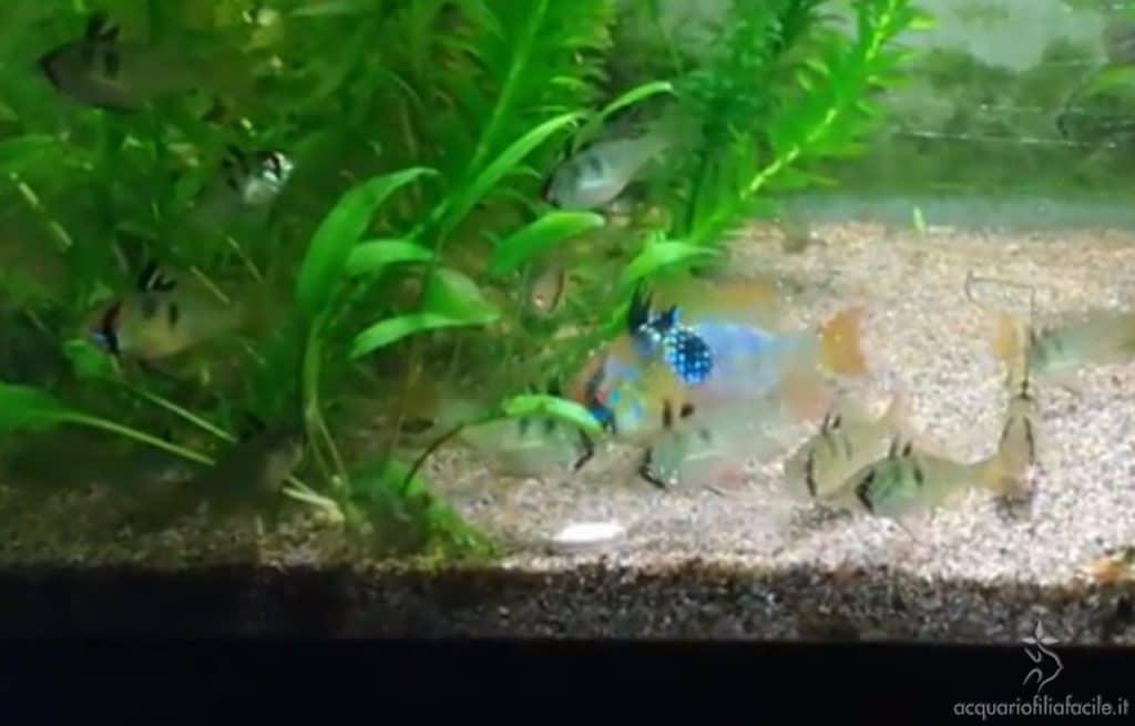 I piccoli (82 giorni)