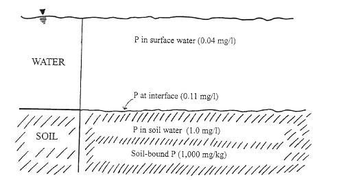 Figura VIII 4