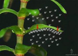 Decalcificazione biogena 1