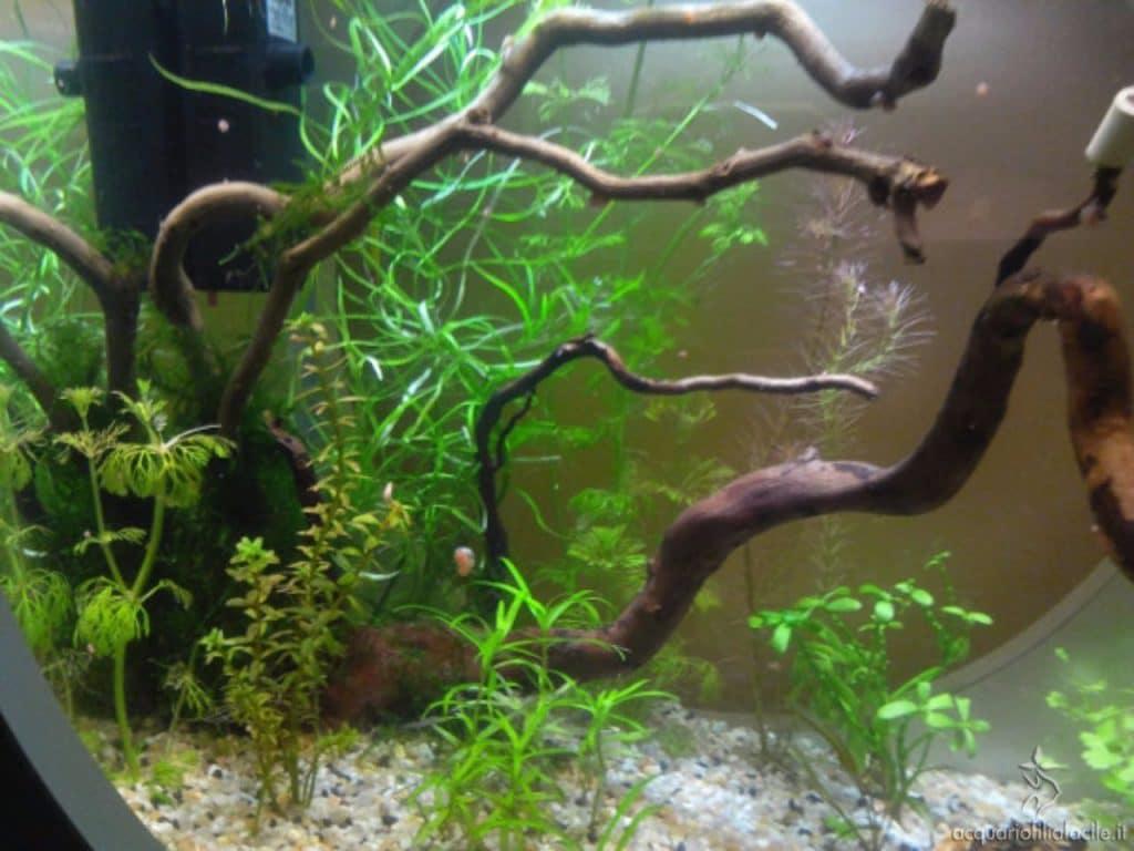 acquario con legni uniti
