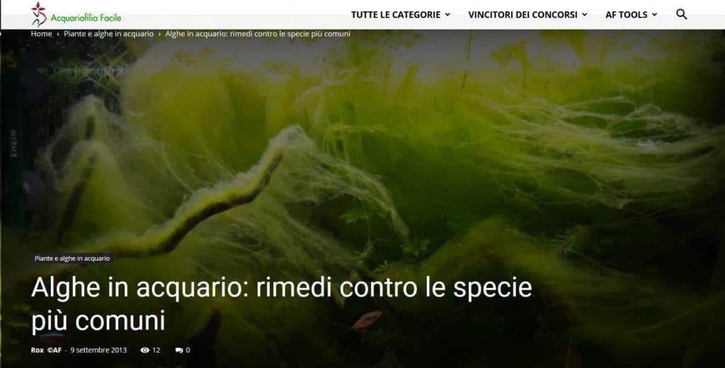 articolo alghe in acquario