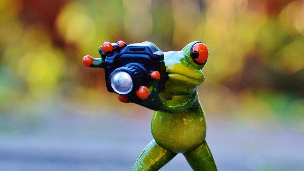 Come fotografare il nostro acquario