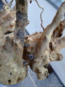 legno B con viti