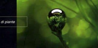 Una sintesi di «Ecologia dell'acquario di piante»