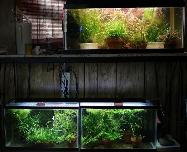 Breeding Tanks