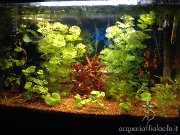 Acquario con fertilizzanti easy-life