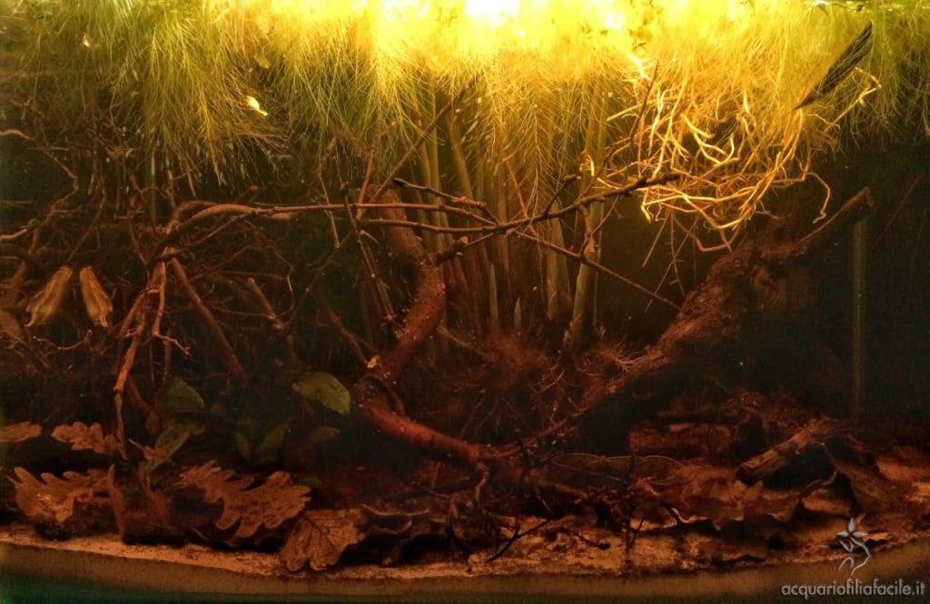 Effetto delle luci in uno degli allestimenti black water di Giueli