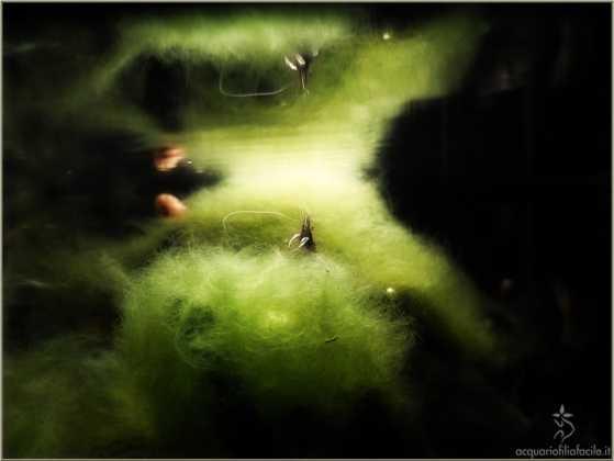concorso fotografico 2012 bolas de alga