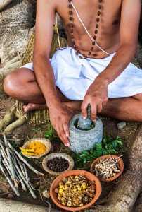 Preparazione della Bacopa nella medicina ayurvedica