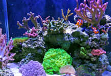 I Coralli: guida introduttiva