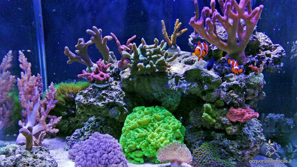 Coralli nell'acquario di Aleph0