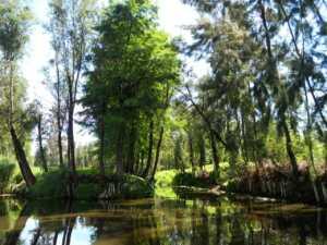 Lago Xolchimilco