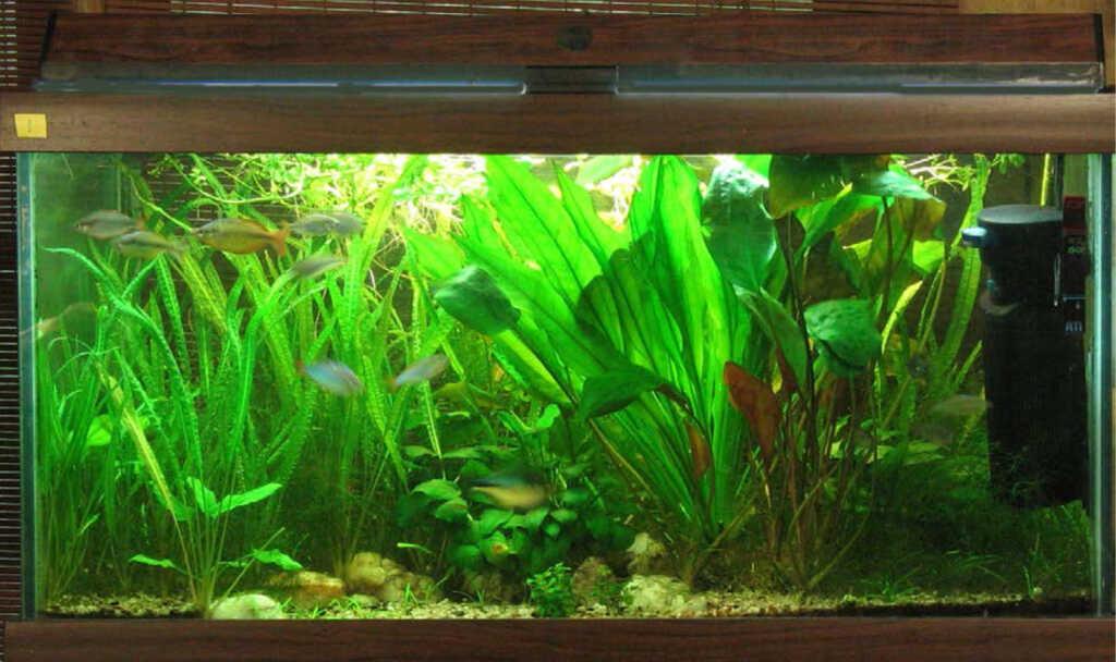 Acquario di Diana Walstad: le piante come «filtro biologico»