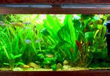 L'assorbimento dell'azoto da parte delle piante acquatiche