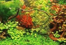 Ecco il mio acquario! (per guppy e caridina)
