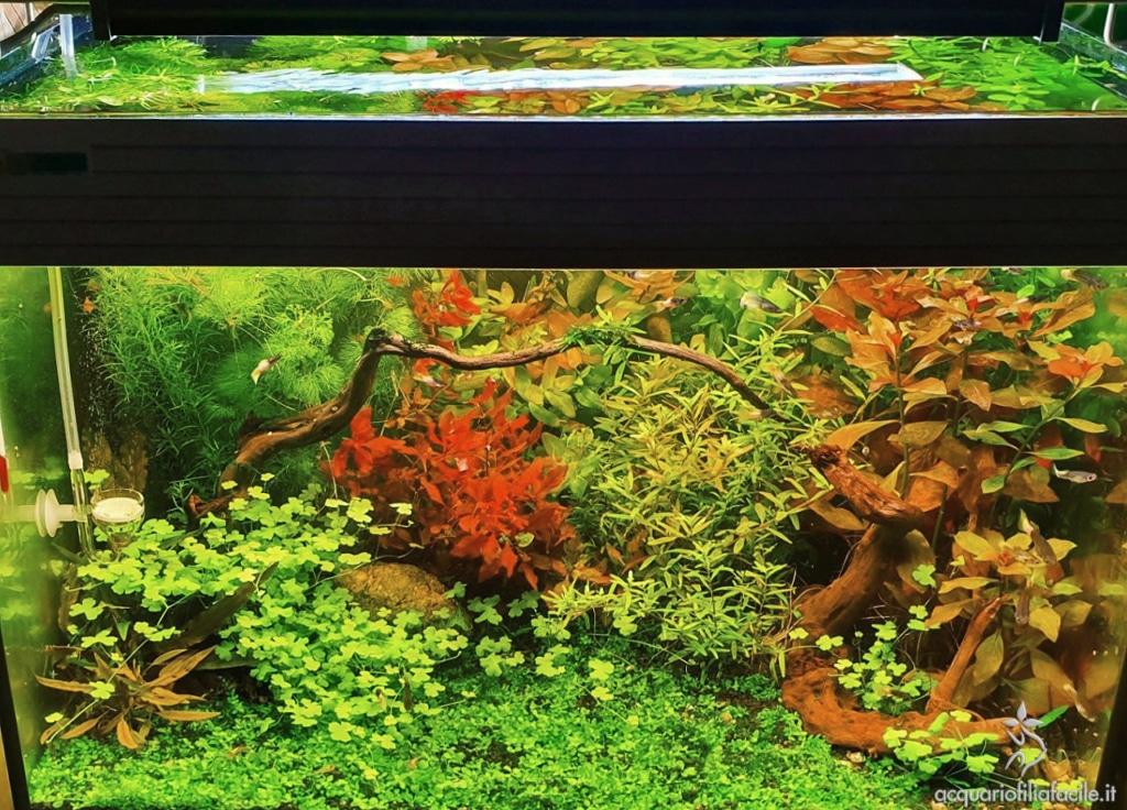 Ecco il mio acquario! (per guppy e caridina) - panoramica