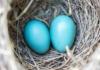 Incubatrice per uova «egg tumbler»