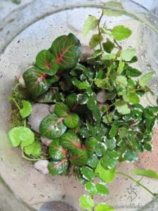Messa a dimora delle piante nel vaso