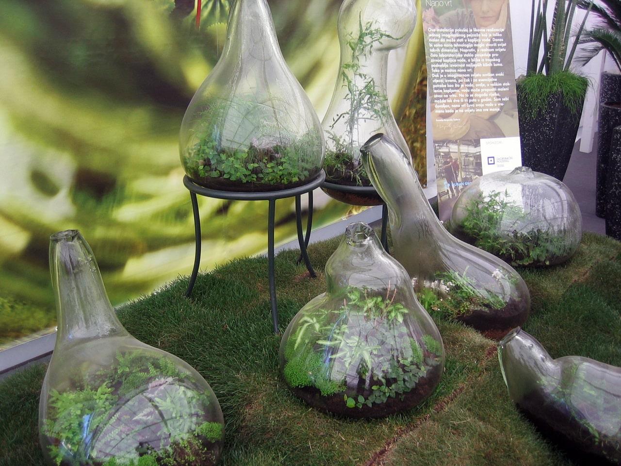 Piante Strane Da Appartamento bottle garden, un giardino in bottiglia | acquariofilia facile