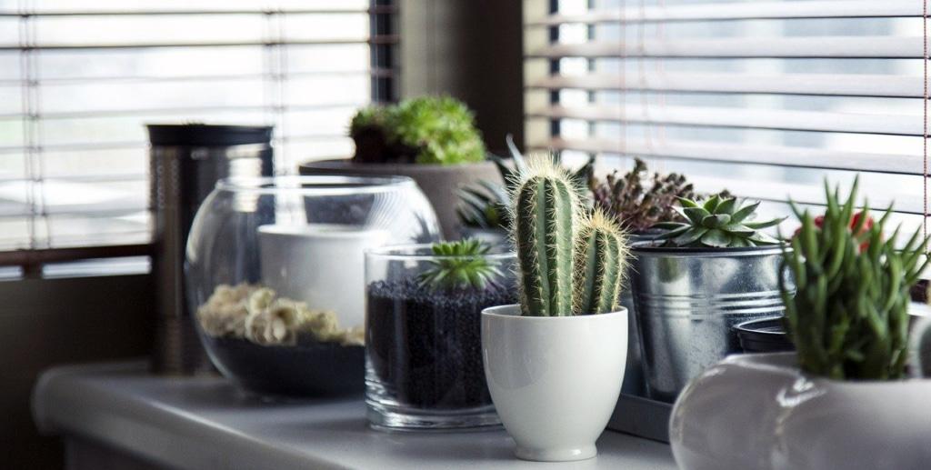 Luce naturale necessaria per la crescita corretta del giardino in bottiglia