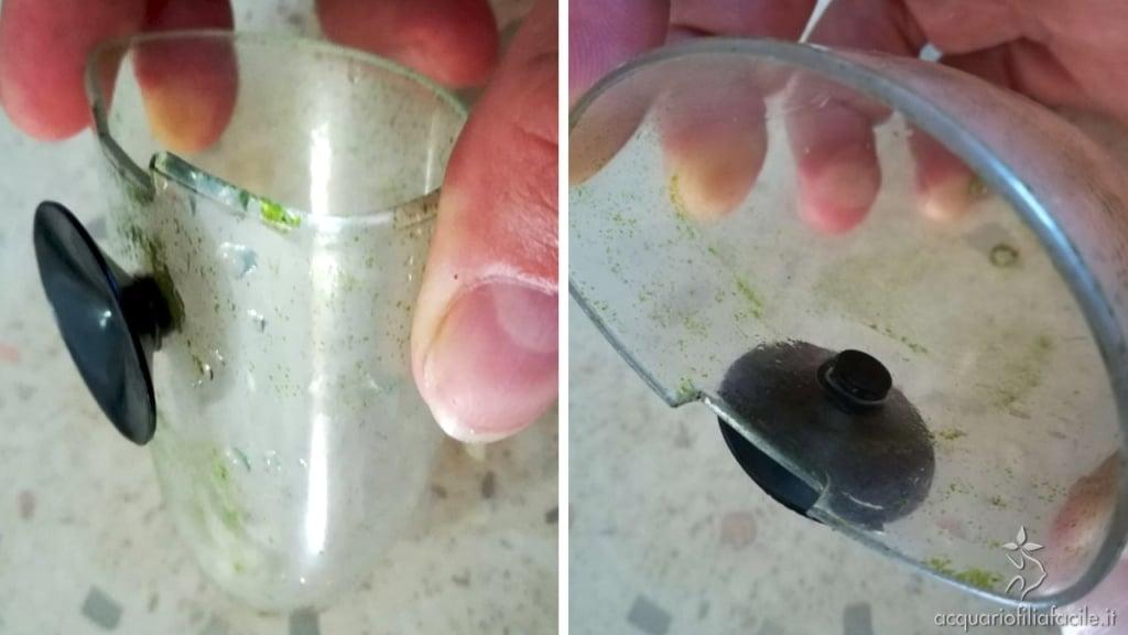 Ventosa inserita nella parte posteriore del beverino / vaso da parete