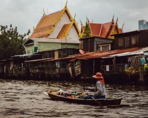 Canali di Bangkok abitati dai Trichopsis vittata