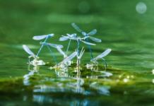 Insetti e ragni in acquario