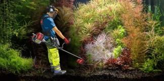 Video articolo: Potare le piante in acquario