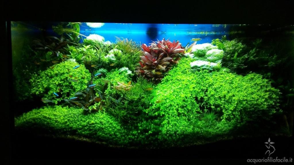 Acquario di piante gestito in modo semplice
