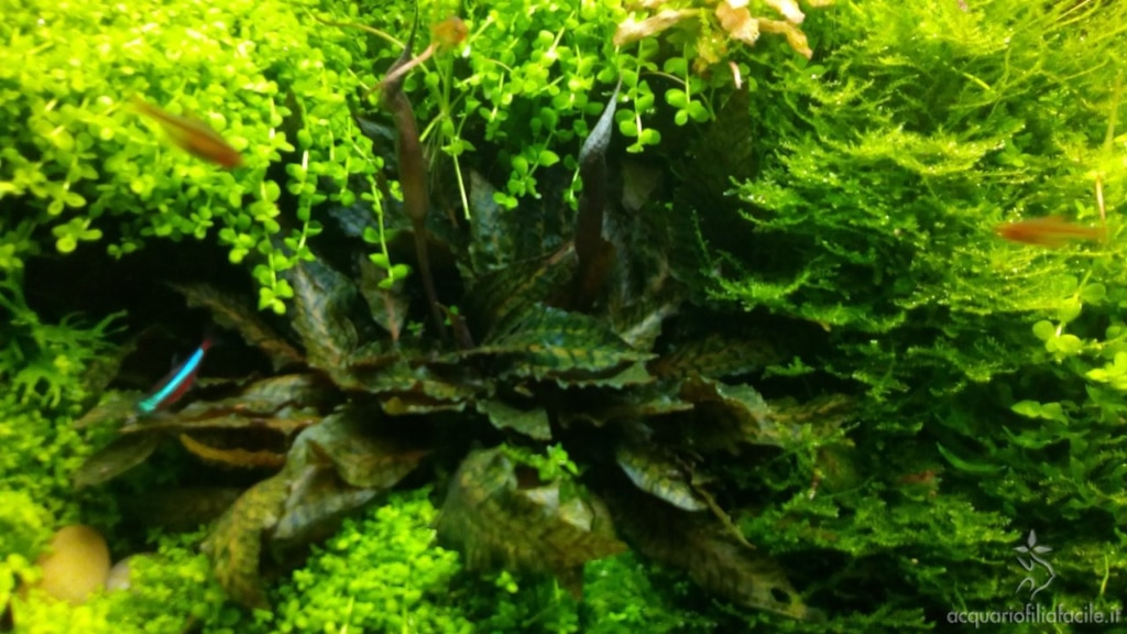 Dettagli dell'acquario di piante gestito in modo semplice