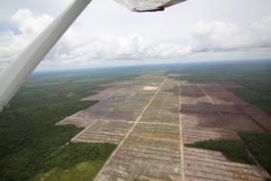Coltivazione di olio di palma