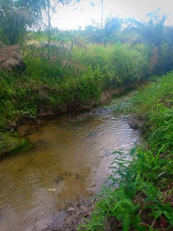 Fiume-Kampar Kanan, habitat dei Parosphromenus