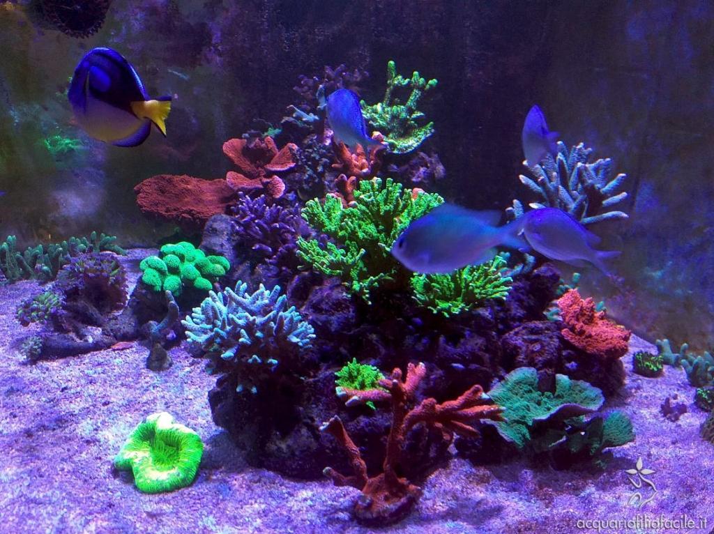 Pesci e coralli si nutrono di zooplancton