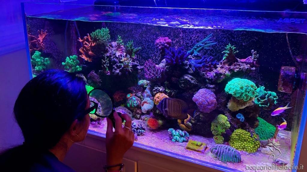 È affascinante osservare da vicino la vita che si sviluppa in un acquario marino tropicale
