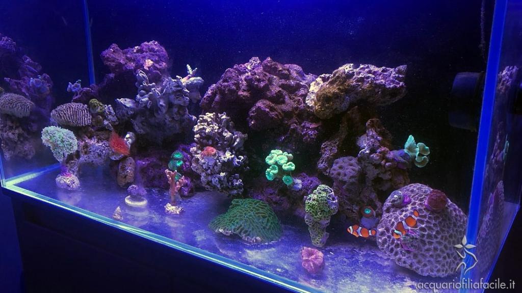 La differenza tra rocce vive e sintetiche scompare man mano che l'acquario prende vita
