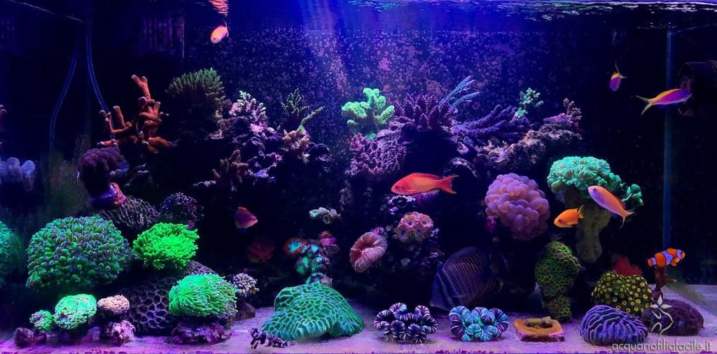 L'acquario marino tropicale di Bradcar completamente colonizzato dai coralli