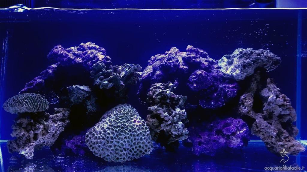 Acquario marino tropicale in maturazione, a fotoperiodo pieno
