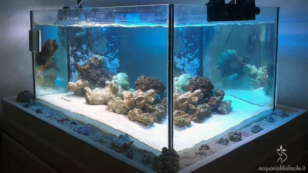 Acquario marino tropicale in fase di maturazione